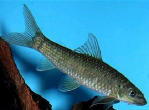 nibble_fish_spa